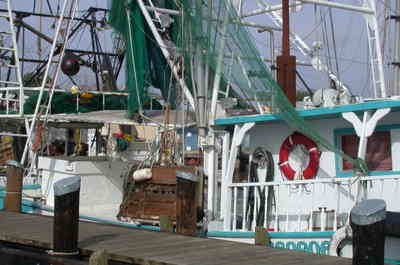 Shrimp_boats_1